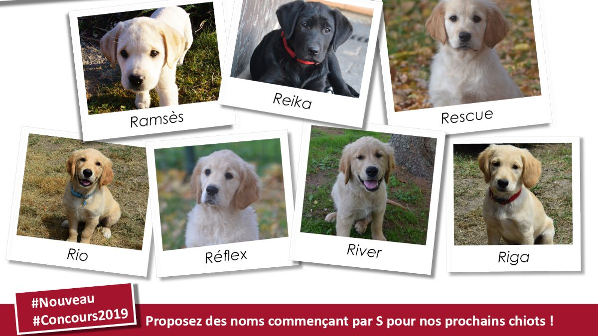 Concours chiots 2019