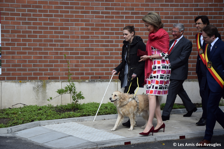 Dressage chien aveugle belgique